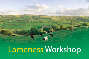 lamesness workshop